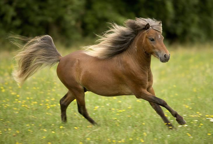 Modello Horse Farm's geldings